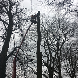 Tree Surgery in Reading